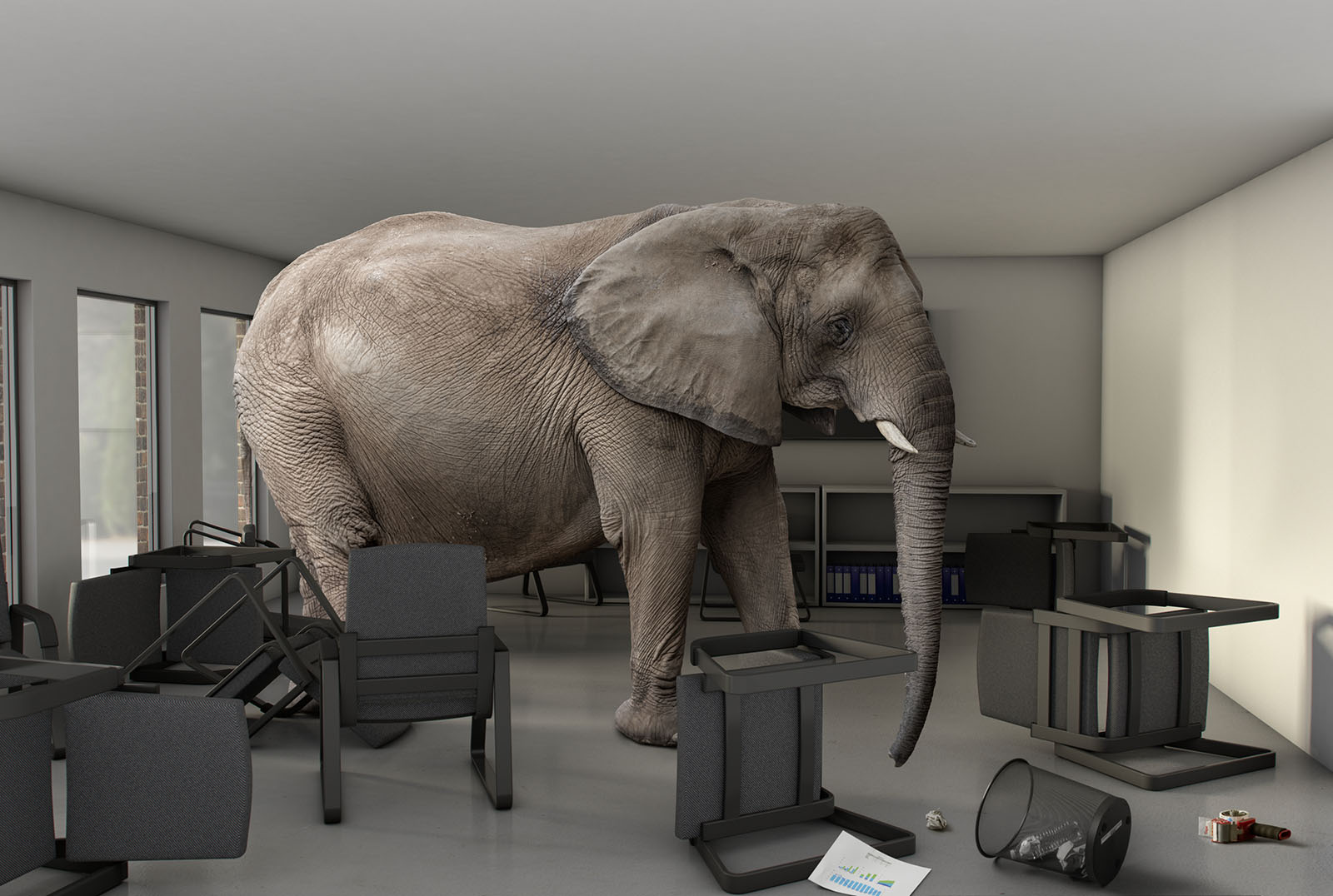 An elephant inside a business meeting room.